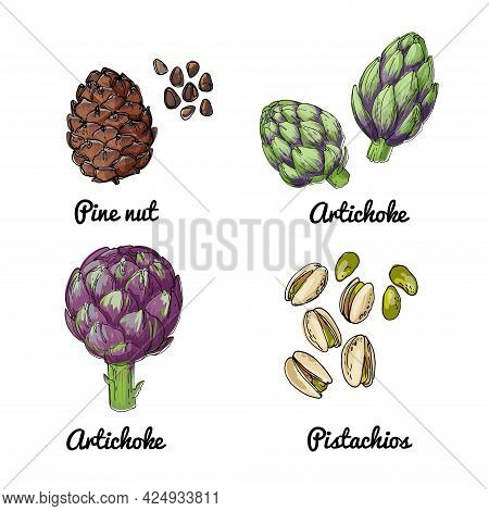 Vector Food Icons Of Vegetables. Colored Sketch Of Food Products. Pine Nut, Artichoke, Pistachios
