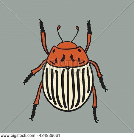 Potato Beetle Illustration. Vector Design Isolated Element.