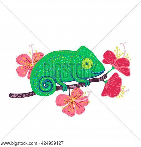 Chameleon On A Branch With Hibiscus Flowers Isolated On White Background.