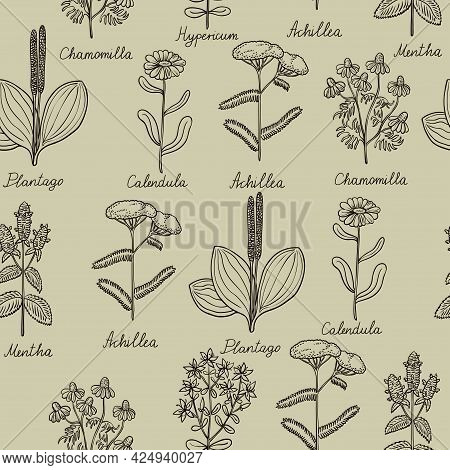 Seamless Pattern With Vintage Botanical Illustrations Of Medicinal Herbs.