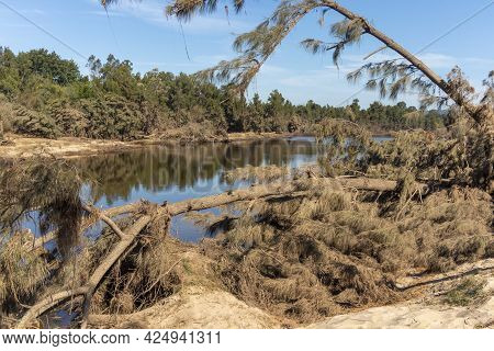Photograph Of Fallen Trees Near The Nepean River After Severe Flooding In Yarramundi Reserve In The