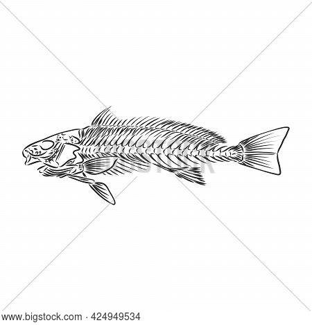 Hand Drawn Fish Skeleton Fossil, Vector Illustration