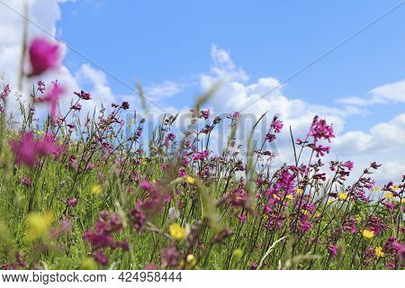 A Beautiful Field Of Flowers On The Background Of A Blue Sky With Clouds.
