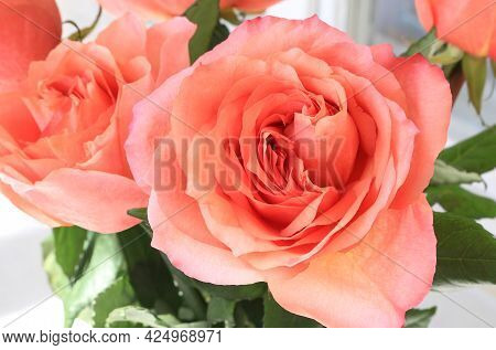 Beautiful Bouquet Of Delicate Roses, Close Up