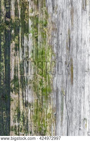 Wood Texture With Moss And Mold. Wood Texture, With Weathered Look, Moss And Mold. Ideal For Concept