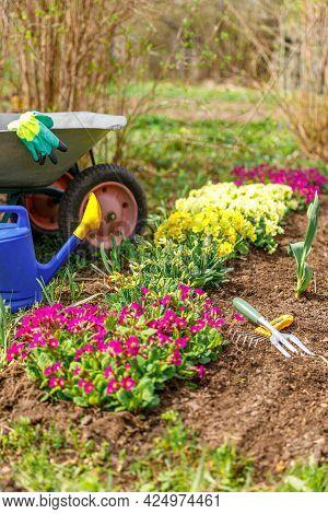 Flowerbed And Gardener Equipment Wheelbarrow Garden Cart, Watering Can, Garden Rake In Garden On Sum