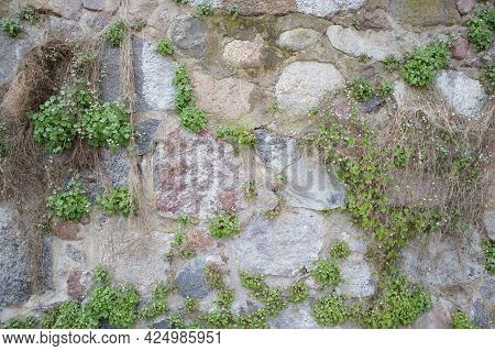 Background Of Ancient Stone Masonry Overgrown With Green Plants.