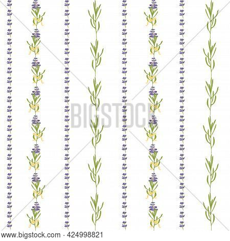 Seamless Pattern With Violet Lavender Beautiful Flower Template In Flat Watercolor Style Isolated On