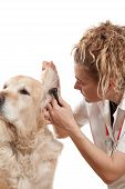 Veterinary consultation and a follow a dog poster