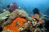 Indonesian coral reef in North Sulawesi near Monado poster