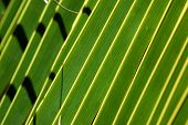 close palm leaves giving a banded green pattern poster