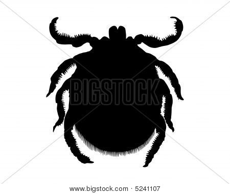 The black silhouette of a tick on white poster