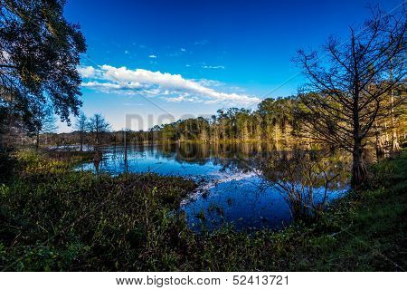 Old Cypress Trees Casting Beautiful Reflections on the Dark Waters of Creekfield Lake