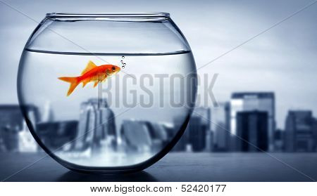 Lonely Goldfish at the window