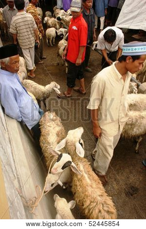 goats and sheep market