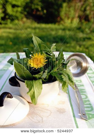 Edible Weed Plants In A Small Pot
