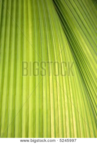 Section of a tropical green palm leaf. poster