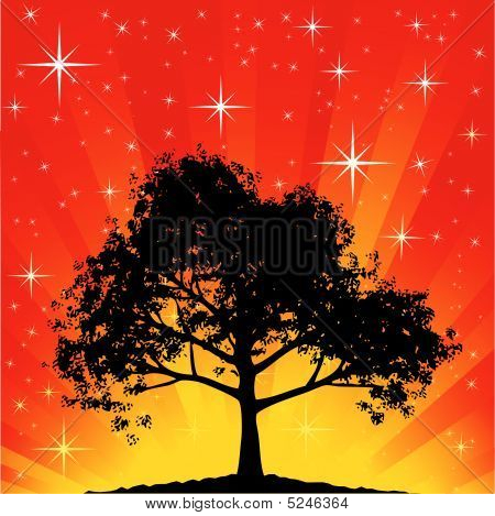 Star field burst oak