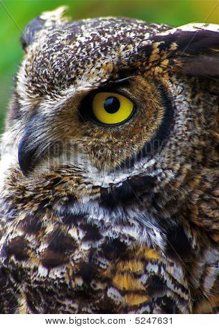 Owl One
