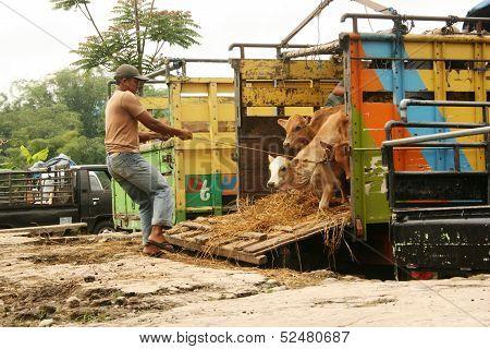 cattle market in Asia