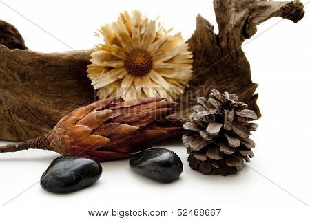 Straw flower with pine plug