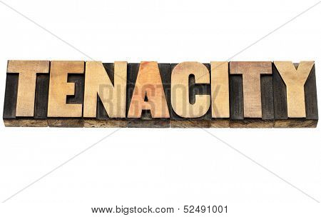 tenacity word - isolated text in vintage letterpress wood type
