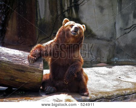 Barroom Bear