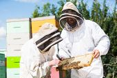 Beekeepers in protective workwear inspecting honeycomb frame at apiary poster