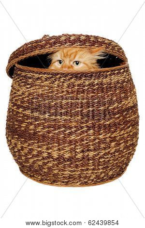 Cat is hiding in a basket. Isolated on a clean white background.
