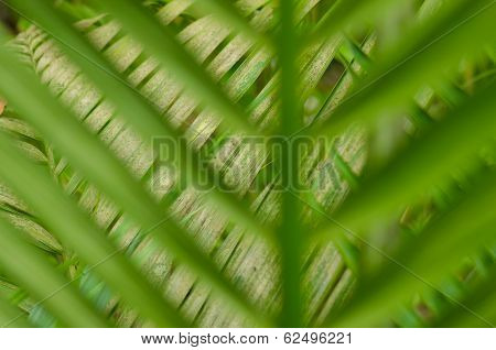 Look Through The Blurred Green Leaves On Green Leaves