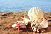 Different kind of seashells on the beach poster