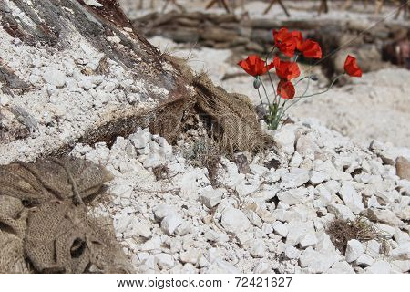 WW1 battlefield with poppies (colour)