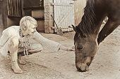 Blonde mature woman petting a horse next to her house poster