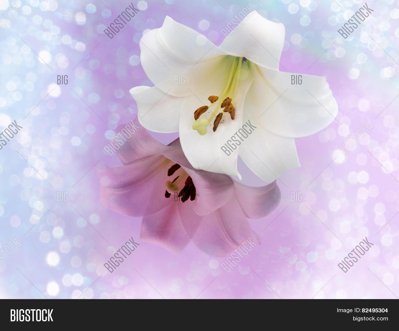 Lily varieties flowers image photo free trial bigstock lily varieties flowers izmirmasajfo