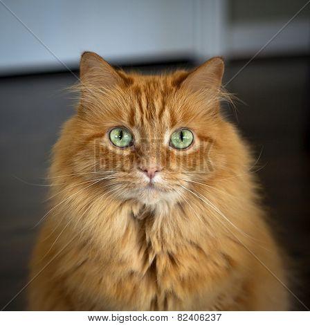 Beautiful green eyed cat staring at viewer