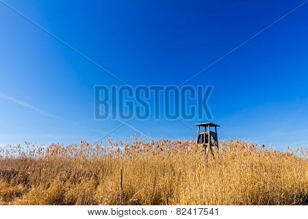 Cane Field