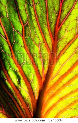 Brightly Colored Abstract Leaf Texture