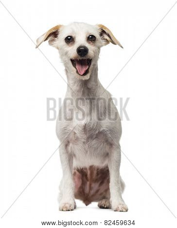 Crossbreed dog (18 months old)