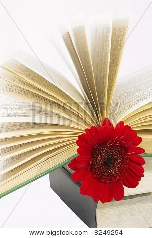 Pile Of Books With A Red Flower.