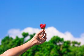 Fresh Strawberry On Sky And Trees Background