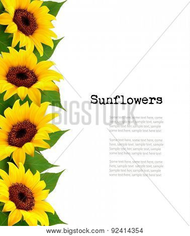 Sunflowers Background With Sunflower And Leaves. Vector