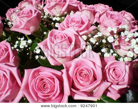 Branch of pink roses