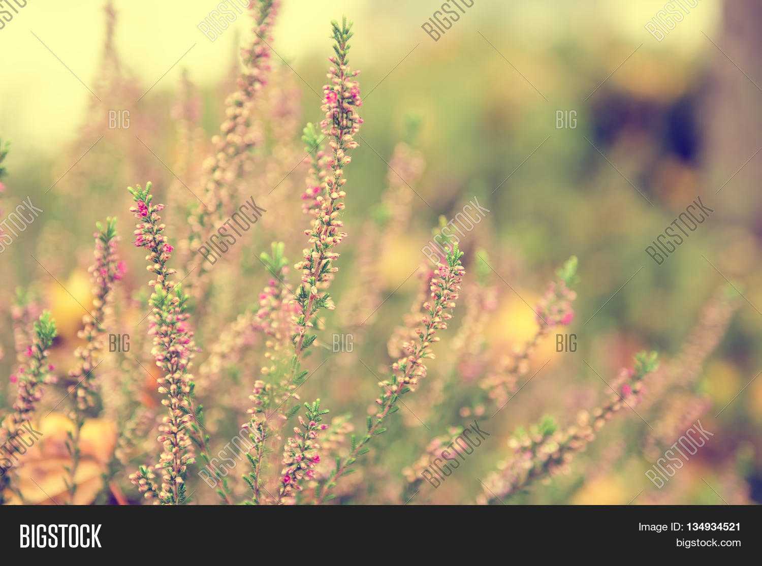 Blooming Beautiful Image Photo Free Trial Bigstock