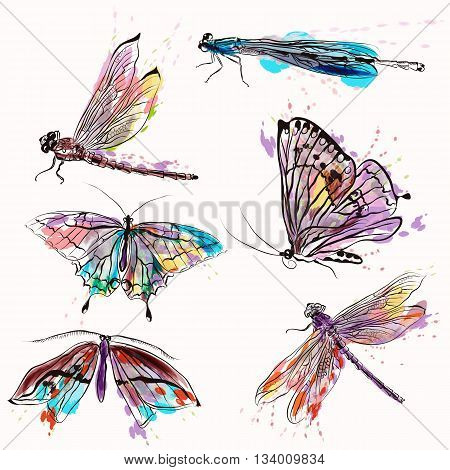 A collection of vector insects for design