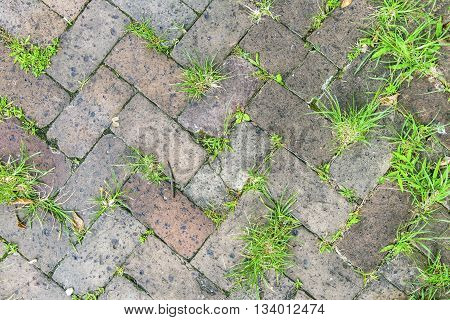 Old Tiles At The Sidewalk With Plants In The Joints