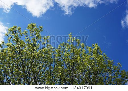tree branch sprout in spring for design