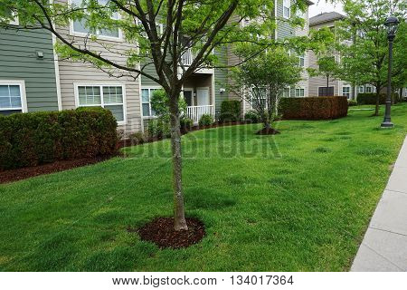 landscaping lawn and green tree in apartment community