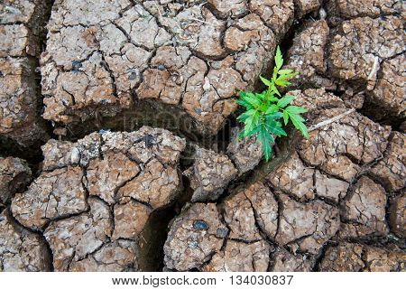 Living with Drought, Reborn tree, cracked ground