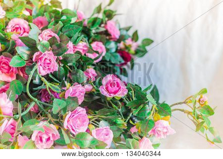 Pink of roses on a white background