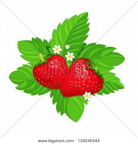 Isolated two strawberries on green leaves with white flowers Cartoon style. Vector illustration.